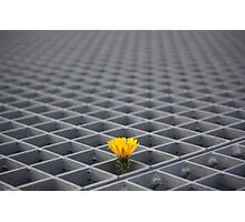 Lonely yellow flower among metal grid Photographic Print