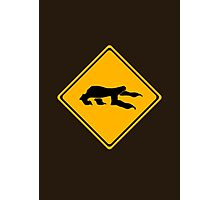Sloth Crossing Photographic Print