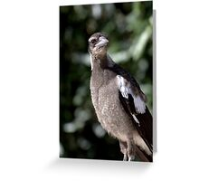 North Head Manly - Stop and look Greeting Card