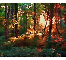A Light in the Forest Photographic Print