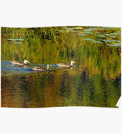 Autumn Feathers And Rippled Reflections Poster