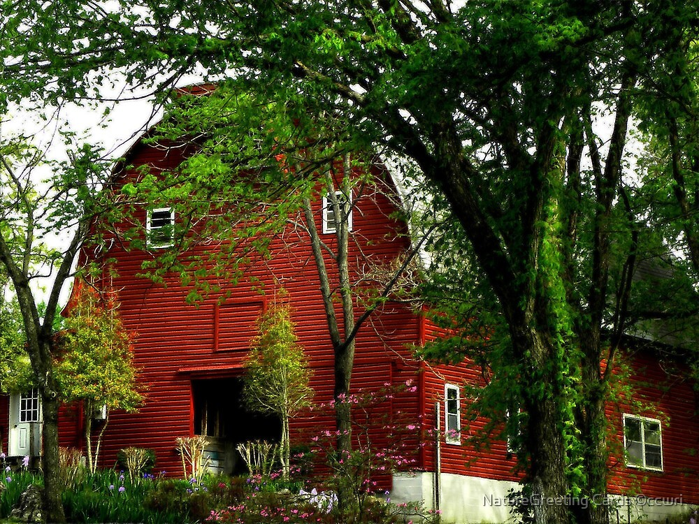 The Red Barn by NatureGreeting Cards ©ccwri