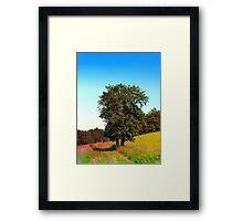 Old tree, vibrant surroundings Framed Print