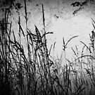 Long Grass by ReidOriginals