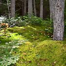 Forest Floor Moss and Trees by Nadine Staaf