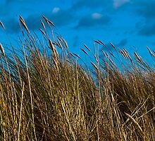 Dune grasses and sky by David Hall