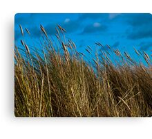Dune grasses and sky Canvas Print