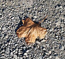 Lone Leaf in a Sea of Stones by BialySnieg96