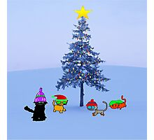Four Cat By A Christmas Tree Photographic Print