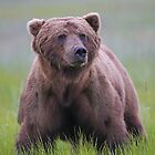 A Big Brown Bear!! by jozi1