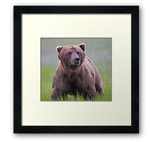 A Big Brown Bear!! Framed Print