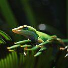 Little Lizard On A Sago Palm Tree by Kathy Baccari