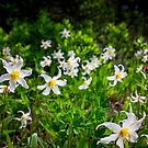 White Avalanche Lily by Jonicool