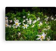 White Avalanche Lily Canvas Print