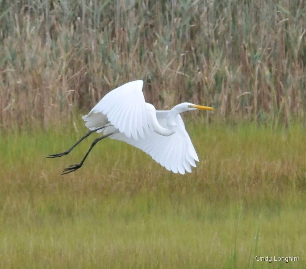 White Heron in Flight by Cindy Longhini