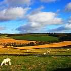 Sheep Grazing by hildamurray