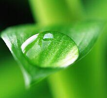 Bamboo by Falko Follert