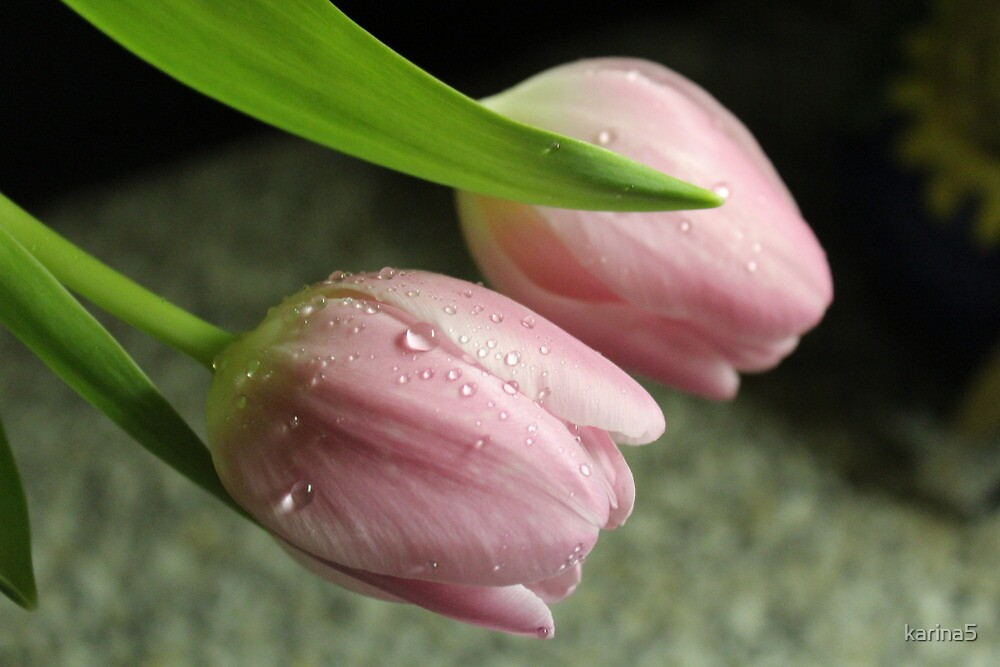 Pink Tulips by karina5