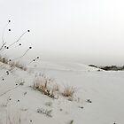 Monahans White Sand Hills ~ Desert Life ~ 4 by Carla Jensen