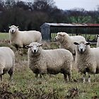 The Flock by JEZ22
