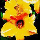 Yellow © by Dawn M. Becker