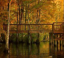 Fall River Reflection by Kathy Baccari