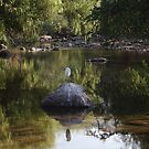 Rock And Bird With River Scape - Roca Y Ave Con Paisaje Fluvial by Bernhard Matejka