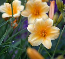 Light yellow day lilies. by Amara Paul