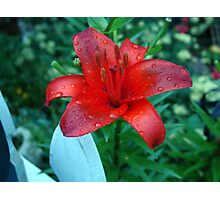 Beautiful vibrant red lily. Photographic Print