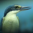 """Sacred Kingfisher"" Portrait by Christopher Pope"