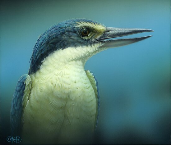 &quot;Sacred Kingfisher&quot; Portrait by Christopher Pope