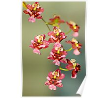 Macro Orchids Poster