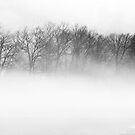 Lake's Edge by Mary Ann Reilly