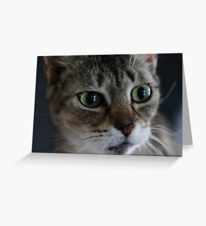Transfixed Abyssinian  Greeting Card