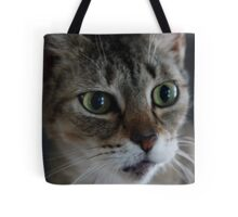 Transfixed Abyssinian  Tote Bag