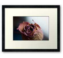 Rose of Days Past Framed Print
