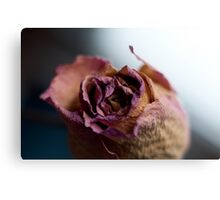 Rose of Days Past Canvas Print