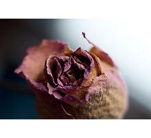 Rose of Days Past Photographic Print