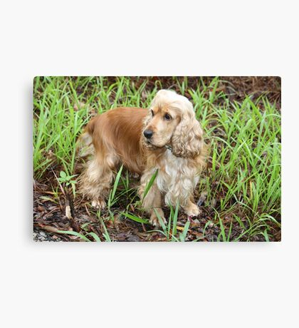 The Rains Are Here: Gemini in Wet Grass Canvas Print