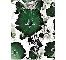 Floral Green Photographic Print