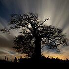 Tree on Raddon Top in Moonlight by peteton