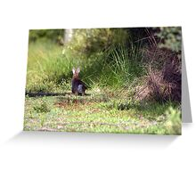 North Head Manly -  Cute  Greeting Card