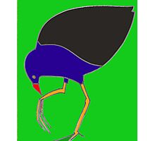 Pukeko eating from foot - green Photographic Print