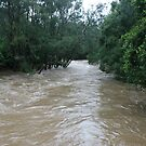 The Rains Are Here: Tallebudgera Creek Flooded by aussiebushstick