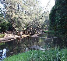 Tallebudgera Creek Before The Flood by aussiebushstick
