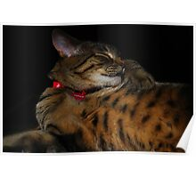 My Little Bengal Girl? Poster