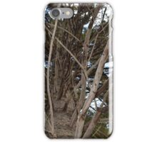 Cool Tree Branches iPhone Case/Skin