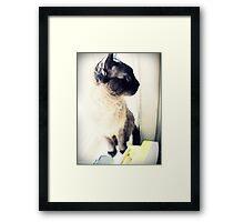 Nini 2 Framed Print