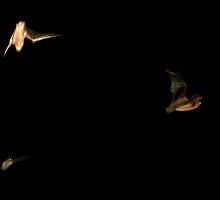 Bats by Michael Krysiewicz