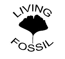 Ginkgo leaf. Living Fossil Photographic Print